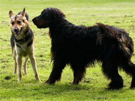 hundesprache koerpersprache beim hund richtig verstehen