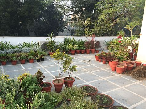 terrace gardening ideas dhara the earth an indian gardening blog my roof top terrace garden