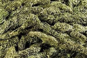 what is the difference between hemp and cannabis