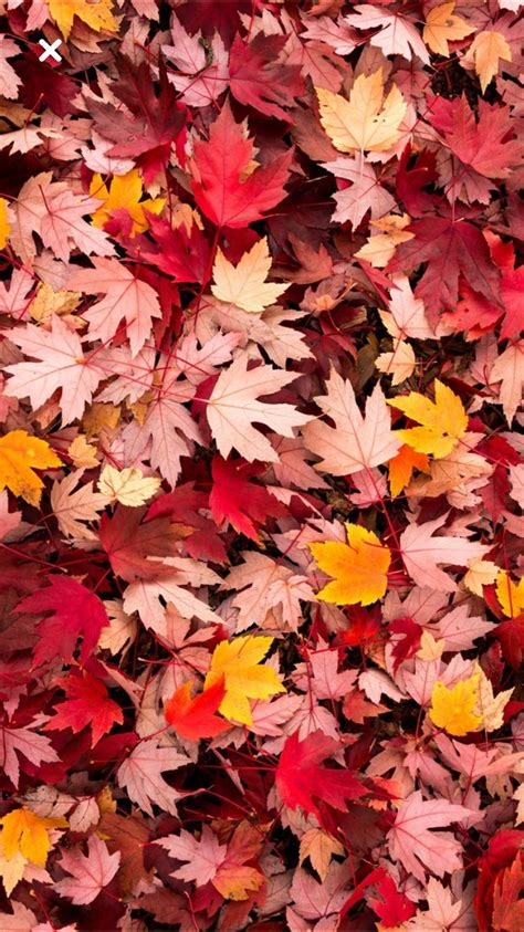 Beautiful Fall Leaves Iphone Wallpaper by Herfst Autumn Iphone Wallpaper Fall Iphone 5