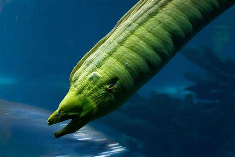 Water Animal Wallpaper - water sea animals fish eels underwater 1800x1204 wallpaper