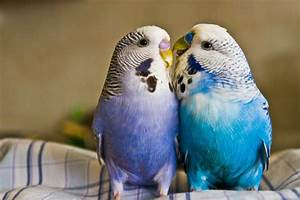 Love Birds HD Wallpapers | Beautiful Loving Birds ...