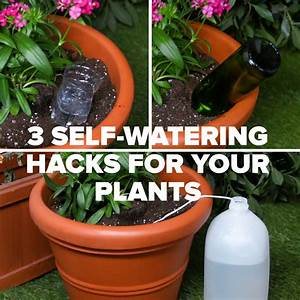 Keep Your Plants Happy And Hydrated With These 3 Self