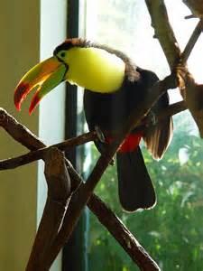Toucan Sam Bird