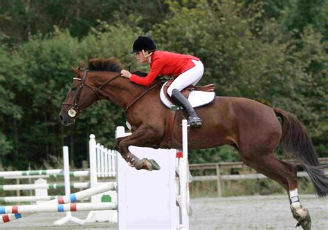 jumping horse riding horseback sport competition rider getty