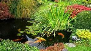 Plantes Vivaces Autour D Un Bassin : bassin pour plantes aquatiques ~ Melissatoandfro.com Idées de Décoration
