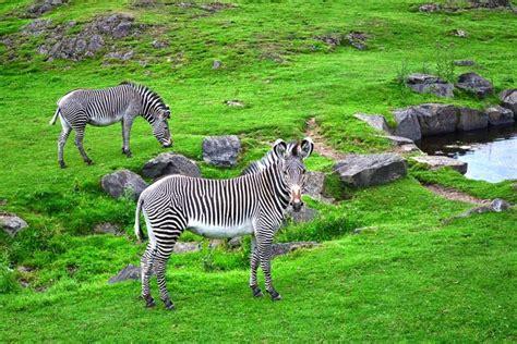 zoo edinburgh tourscanner
