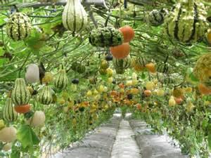 Types Of Pumpkins In India by Halloween Pompoenen 2012 Halloween Pompoenen 2012