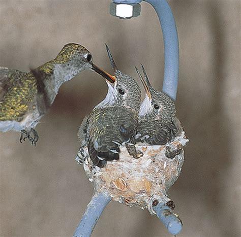duncraft com hummingbird house