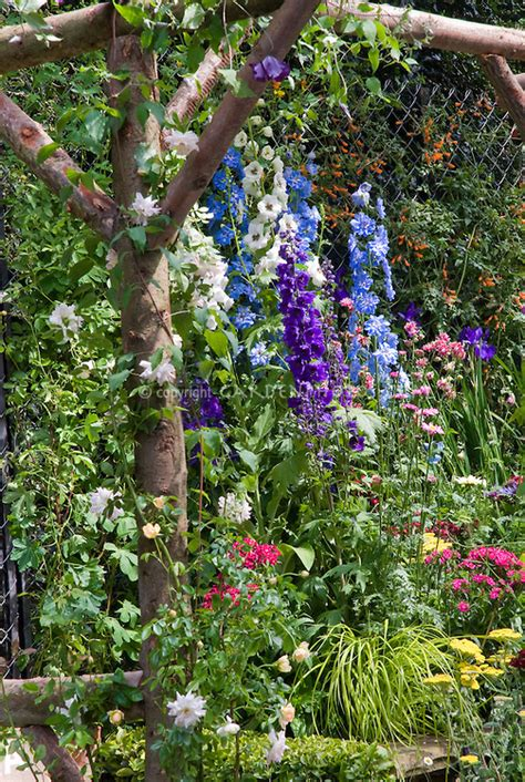 cottage garden with roses delphinium plant flower