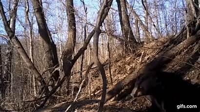 Bear Emerging Den Hibernation Hibernating Incredible Slowly