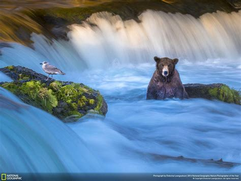 national geographic  twitter browse