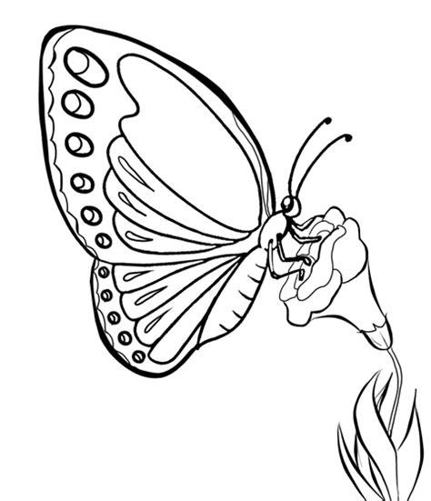 mewarnai gambar kupu kupu alamendahs blog
