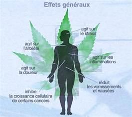 Le Pour Cannabis by Le Cannabis Soigne T Il Docteurbonnebouffe Com
