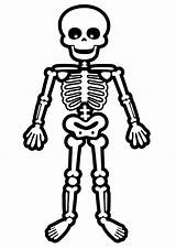 Skeleton Coloring Pages Bone Cartoon Halloween Print Standing Drawings Dog Cartoons Toddler Drawing Bones Skeletons Printable Human Cute Draw Easy sketch template