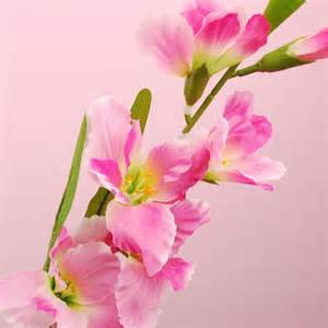 purple decorations futaba sousyoku rakuten global market gladiolus