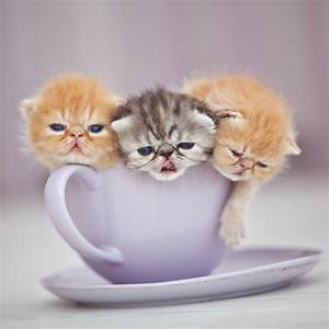 Cats in Cup-Cup of Cuteness to Keep Grumpies Away (PHOTOS ...