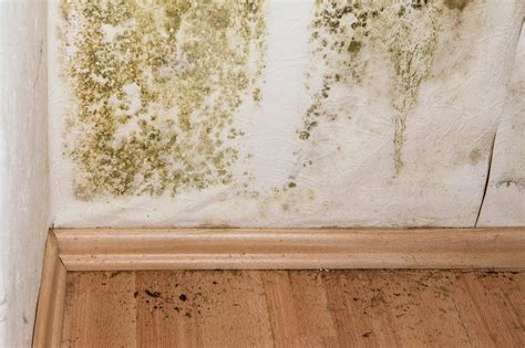 mold remediation cost eliminating mold  household
