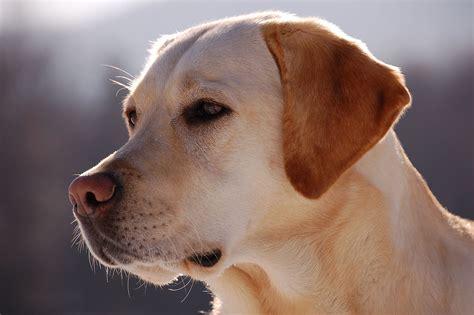 List Of Most Popular  Ee  Dog Ee   Breeds