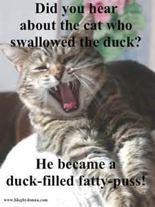 cat jokes for cat jokes cathy still waters