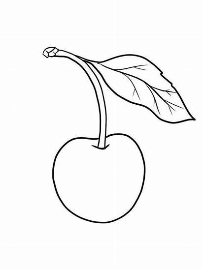 Cherry Coloring Pages Printable Fruit Healthy Coloriage
