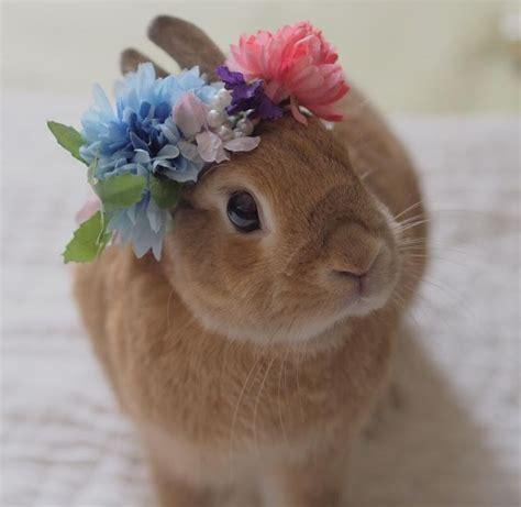 photo google  kaninchen haeschen hase