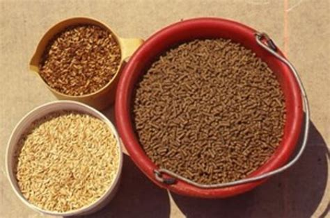 extruded feed explained  horse owners resource