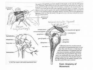 Anatomy Movement