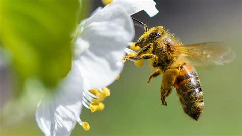 Was Hobbygärtner Für Bienen Tun Können