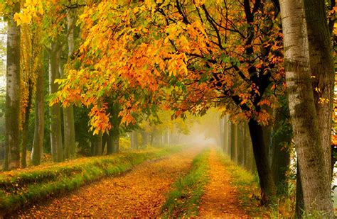 Fall colors walk leaves autumn nature trees road forest ...