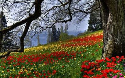 Spring Flowers Meadow Colored Forest Garden Flower