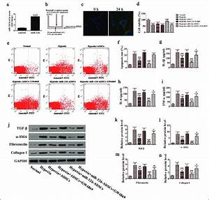 Protective Effect Of Exosomes Derived From Adipose