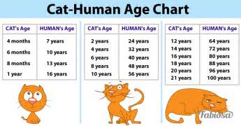 cat year conversion use this simple chart to calculate how is your pet in