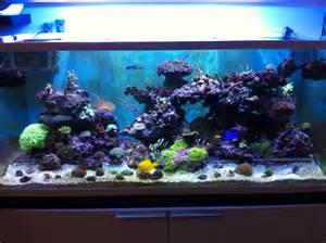 aquarium eau de mer fish only aquarium eau de mer fish only 28 images photo aquarium fish only aquarium r 233 cif tout