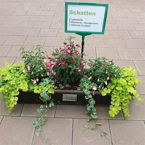 Pflanzen Für Schattigen Balkon : balkonpflanzen die f r einen schattigen balkon geeignet ~ Watch28wear.com Haus und Dekorationen