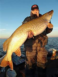 Huge Northern Pike | Sportsmans Habitat