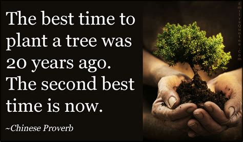 how can you plant a tree to a house the best time to plant a tree was 20 years ago the second