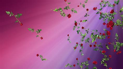 roses pink copy space stock video footage synthetick