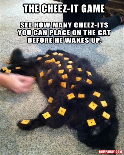 A The Cheeze It Game Funny Cat Pictures  Dump A Day