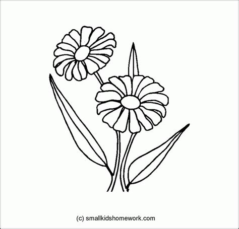 outline  flowers coloring home