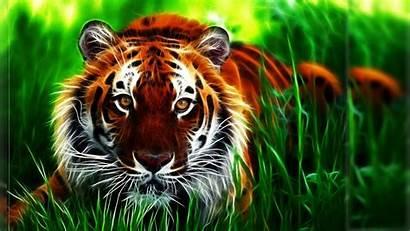 Tiger Cool 3d Desktop Wallpapers Widescreen Wallpapersafari