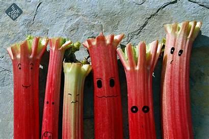 Rhubarb Squash Homemade Rabarbar Pl