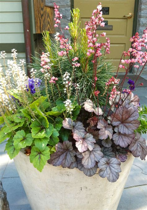 container plantings from terrain and