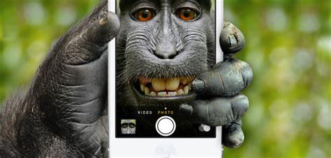 monkey takes  selfie   camera peta  sue