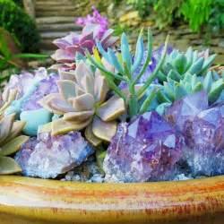 Outdoor Succulent Plant Garden 6 (Outdoor Succulent Plant Garden 6) design ideas and photos
