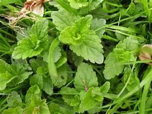 Unkraut Bestimmen Durch Bilder : rasenunkraut pflanzenbestimmung pflanzensuche green24 hilfe pflege bilder ~ Whattoseeinmadrid.com Haus und Dekorationen