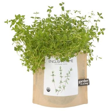 shed in a bag buy potting shed creations thyme garden in a bag at well
