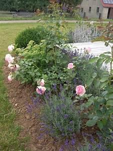 Rosen Und Lavendel : rosen und lavendel mein sch ner garten forum ~ Yasmunasinghe.com Haus und Dekorationen