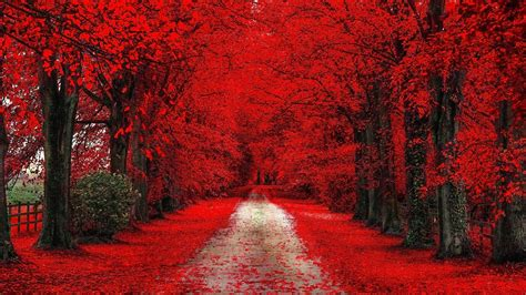 red trees nature hdwallpaperfx