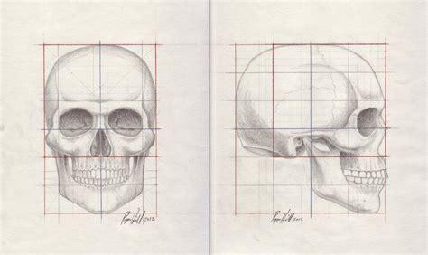 Skull Proportion Study Dorian Deviantart